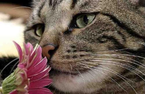 Fleurs De Bach Animal Contact